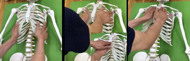呼吸筋に対するAKS治療の展開写真