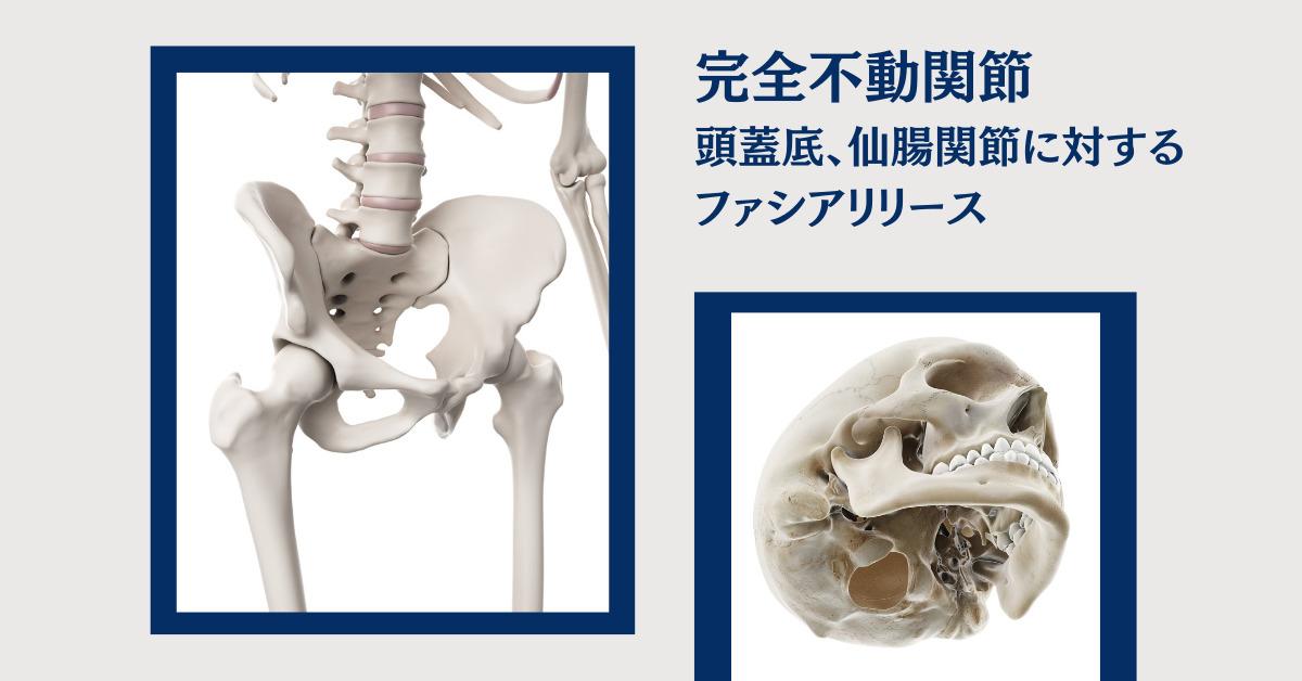 頭蓋底・仙腸関節に対するファシア リリース